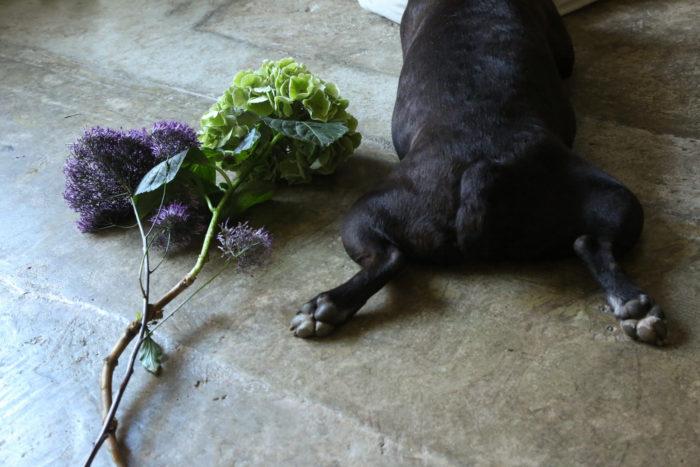 #Blossom 24 花と犬 ボストンテリアのバイス